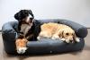 Hundesofa_test