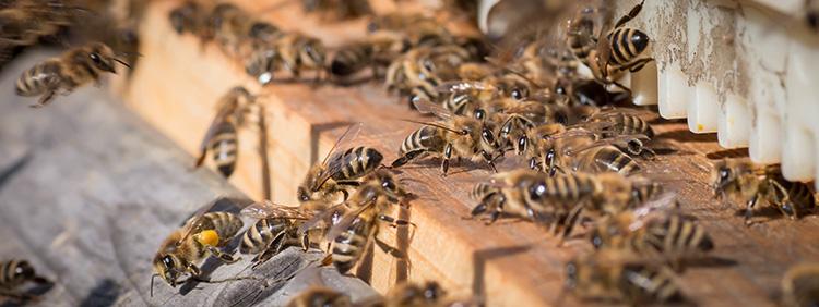 Honigschleuder_im_Vergleich