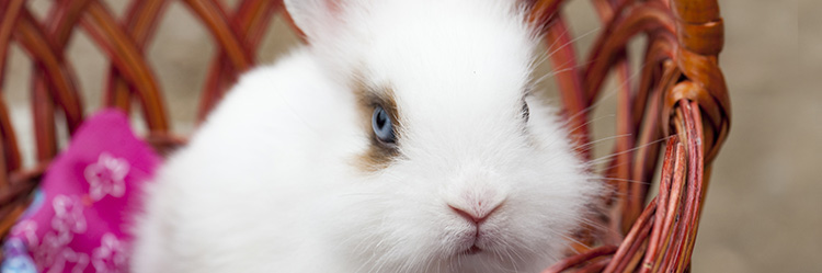 Rückzugsort_kaninchen