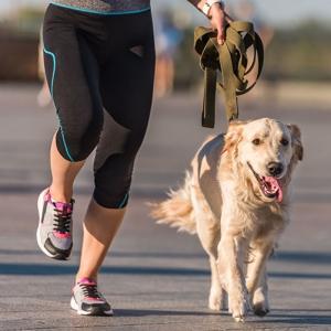 hundebuggy_joggen