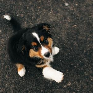 hundebuggy_vergleich